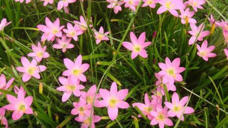 这种花颜色艳丽,而且有一定药用价值!这一点你没有注意到吧?