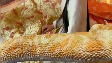 女子吹笛子,召唤一条巨蛇,没想到下一秒,奇怪的事情发生了