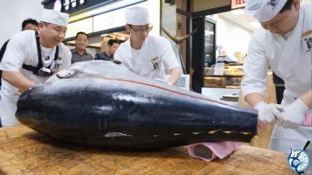 海钓人最终极的目标鱼,世界顶级食材之一,一般人只有看的份