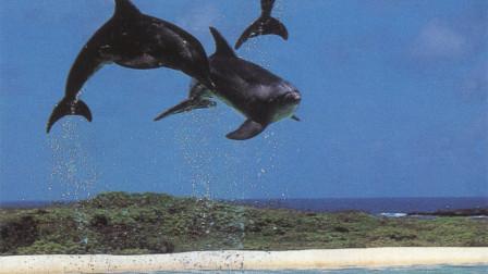 魅力新世纪音乐 Love For The Dolphins