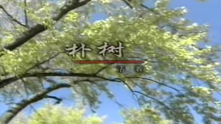 朴树 - 活着