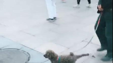 一看就是奶奶带大的狗子,这广场舞跳的真有节奏!