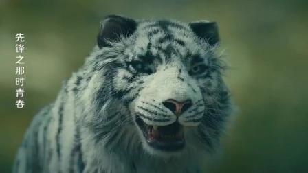 大白虎死死摁住帅哥,男人拿出尼泊尔,凭借气势竟吓走了老虎!