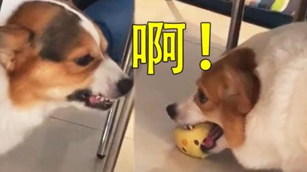我不仅开口和你对话,还要去学四川话!