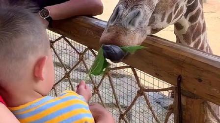 本想拍个喂食动物的视频,不料却拍下尴尬一幕,咱也不敢笑