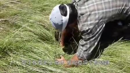 男子拨开草丛,发现一双毛茸茸的腿,拉出来后,憋住别笑!