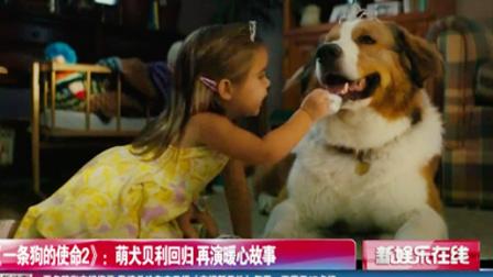 《一条狗的使命2》:萌犬贝利回归 再演暖心故事 SMG新娱乐在线 20190517 高清版
