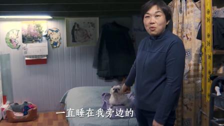 """真实记录:57岁阿姨住在20多平方米房子,14岁小狗成为她的""""闺蜜"""""""