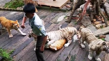 动物和人也会产生感情的