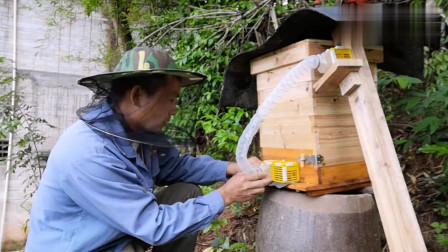 蜜蜂起王台准备分蜂,农村大叔装个自动分蜂器,省时省力