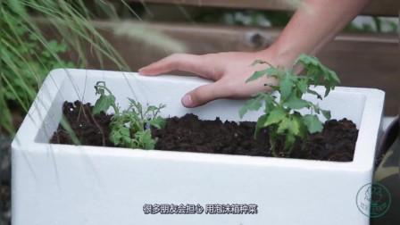 家里的泡沫箱别扔掉,还可以拿来种花,看我是怎么种植的