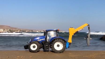 拖拉机挖掘机一起,救援被冲上岸的鲸鱼!