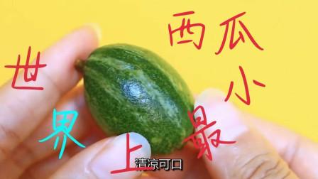 切开世界上最小的迷你西瓜,仅拇指大小,切开里面竟这样