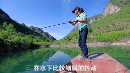 老虎路亚游钓中国 排骨老虎 路亚斑鳜河南