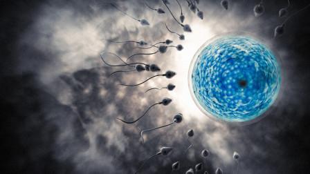"""精子是怎么找""""卵子""""的?用显微镜放大1000倍,看完忍住别笑"""