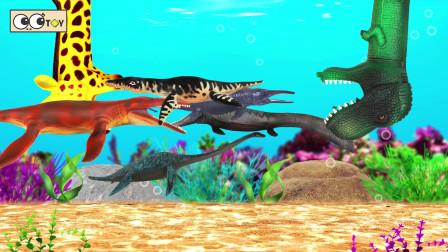我们在鱼缸里养鱼龙吧鱼龙动画结茧的