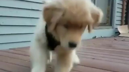 图图的八卦小日记:两只小狗狗的搞笑视频,你知道么?