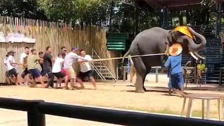 说出来你可能不信,我们被一直大象给套路了