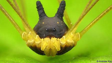 【鬼谷闲谈】螯肢动物番外:演化老司机蜱螨亚纲