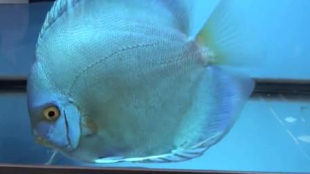 这3种颜色的七彩鱼,我猜很多人没见过,网友:尤其是最后一种