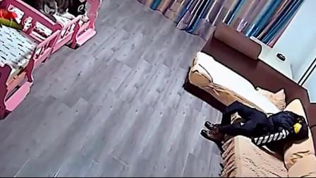 """这主人太""""鸡贼""""了,放个假人在家,狗狗都不敢咬沙发了"""