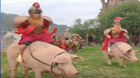 猪也可以当坐骑