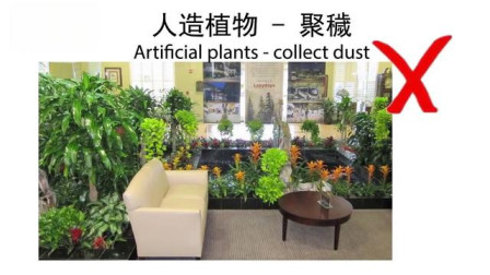 索南易学:家中频发疾病,请大师详解风水,原因竟因为摆放了这种植物