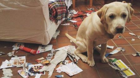 狗子身上有狗子身上有3个部位碰不得,再怎么生气,主人也不能打3何部位碰不得