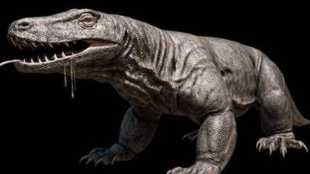 史前最大蜥蜴,古巨蜥生性好斗,长7米重1240斤,暴走的爬行巨兽