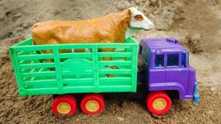 起重机救援动物卡车和其他车 动物卡车运输奶牛