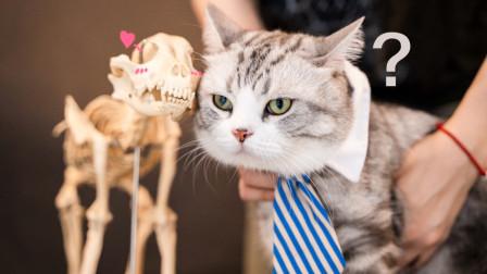 猫咪的呼噜声能治愈骨折?养猫的理由又多了一个!