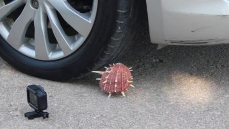 将贝壳放到车轮下面,启动车子会怎样?网友:看着好尴尬!
