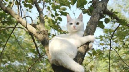 都说猫咪只擅长爬树不擅长下树,这是真的吗?原来大家都有压力