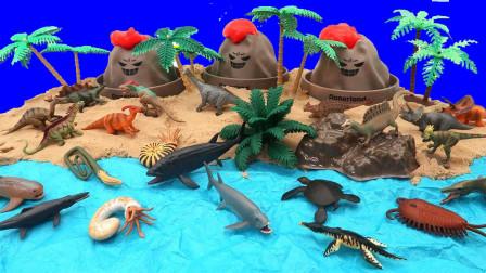 认识海底动物和火山模型