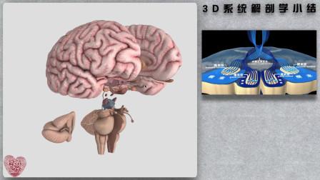 3D系统解剖学-小结