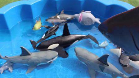 海洋动物为儿童海洋动物学习名称锤头鲨大白鲨虎鲸