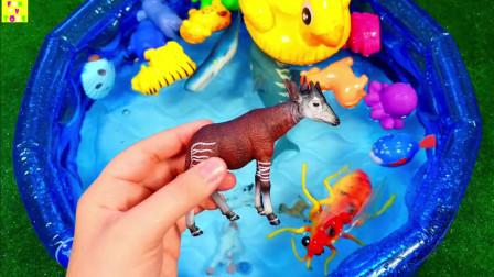 给孩子的动物马玩具给孩子学野生动物学海洋动物