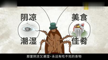 蟑螂是如何繁衍后代的,你一定不知道,赶快进来看看吧