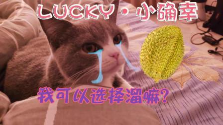 吃播榴莲,猫咪连退三步:我忍住!