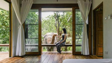 泰国大象民宿