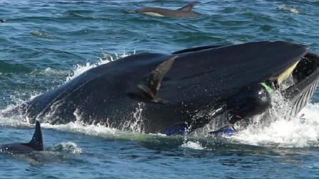 """一名潜水员被鲸鱼""""生吞"""",整个过程被镜头记录,看着都害怕"""