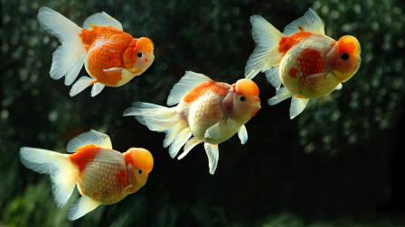 传说鱼的记忆只有七秒,这种说法是真是假?今天可算是知道了