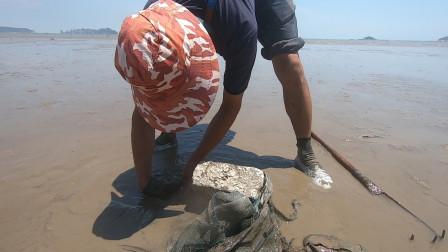 泰叔一个人沙滩赶海发大财,抓到好几十只海货,直接交给老婆安排