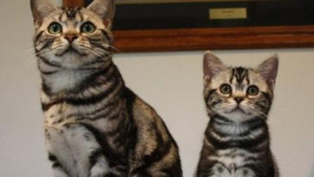 超像猫咪父子档只能感慨基因太强大