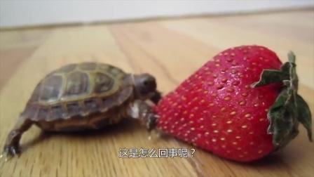 """男子潜水发现""""上古鳄龟"""",带回家养1星期后,警察突然找上门!"""