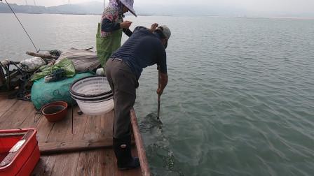 泰叔夫妇收鳗鱼扣,没想到凶猛海货接连上钩,拉到手都开始发软了