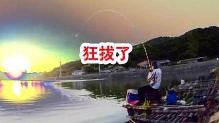 夏季午后小水库浮钓草鱼,各鱼种连竿不断