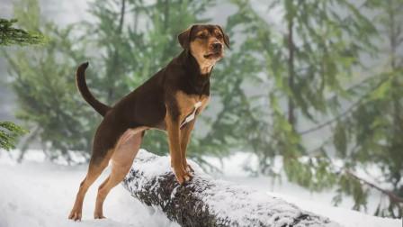 为了回家,狗狗竟历经3年步行400英里,主人也难以置信