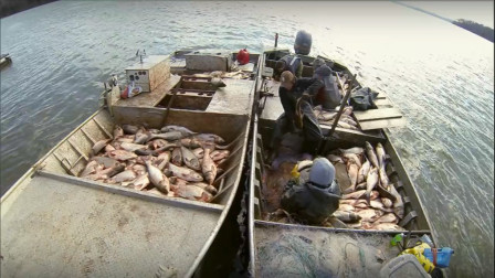 美国泛滥的亚洲鲤鱼好日子到头了,这次可算是被老美收拾惨了