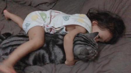 第一次见这么大的猫,和小朋友一样大了哈哈